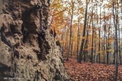 Plener w Podlipcach - Beata Pryma [Listopad 18] 065b