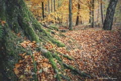 Plener w Podlipcach - Beata Pryma [Listopad 18] 109b