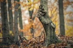 Plener w Podlipcach - Reportaż [Listopad 18] 121a
