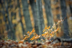 Plener w Podlipcach - Reportaż [Listopad 18] 130a