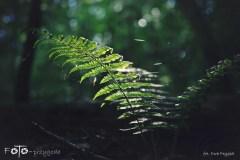 FOTO-Przygoda-w-Świdwinie-Wiosna-19-Ewa-Prygiel-005a