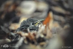 FOTO-Przygoda-w-Świdwinie-Wiosna-19-Ewa-Prygiel-014a