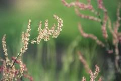 FOTO-Przygoda-w-Świdwinie-Wiosna-19-Justyna-Hudaszek-008a