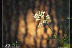 FOTO-Pstryk-w-plenerze-Dolina-Rzeki-Iny-Maj-18-Bożena-Opatowicz-002_Fotorgotow