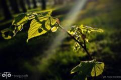 FOTO-Pstryk-w-plenerze-Goleniów-w-Dzień-Kwiecień-19-Anna-Kowalska-040a
