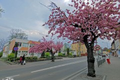 FOTO-Pstryk-w-plenerze-Goleniów-w-Dzień-Kwiecień-19-Anna-Kowalska-095a