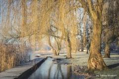 Jezioro Nowogardzkie [Styczeń 18] 017b