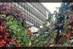 Grażyna Piechowska [Zdjęcia Plenerowe] 001