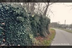 Grażyna Piechowska [Zdjęcia Plenerowe] 016