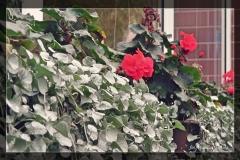 Wanda Obrębska [Zdjęcia Plenerowe] 012