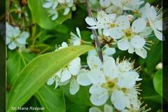 Maria Rzepiak [Kwiecień 18] 047_Fotor