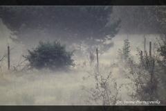 Iwona Pietruszewska [Zdjęcia Własne] 013