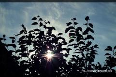Iwona Pietruszewska [Zdjęcia Własne] 016