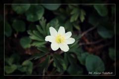 Alicja Szkołut [Kwiecień 18] 006 _Fotorgotowe
