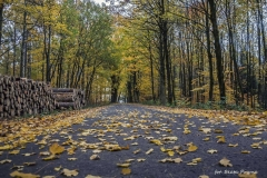 Plener w Podlipcach - Beata Pryma [Listopad 18] 009b