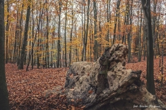 Plener w Podlipcach - Beata Pryma [Listopad 18] 060b