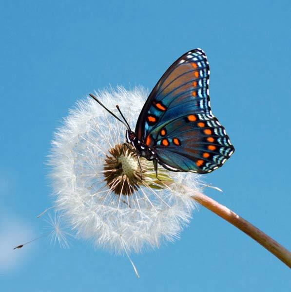 Бабочки на картинках и фото описания и названия бабочек