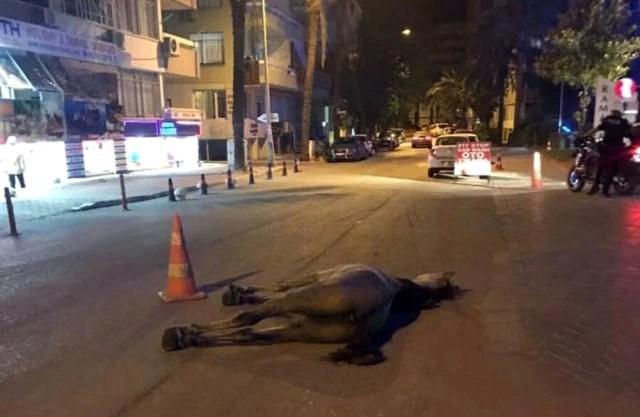 Antalya'da İnsanlık Dışı Görüntü