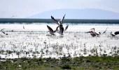 Su Kaynaklarının Kesilmesi Nedeniyle Eber Gölü Haritadan Silindi