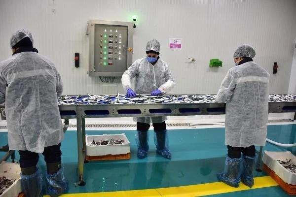 Avrupa pandemide Türkiye'den balık yedi