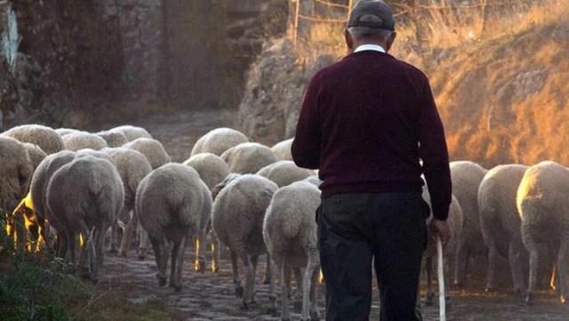 Şehirden köye dönenlere büyük teşvik geliyor! Vergiden bile muaf olacaklar