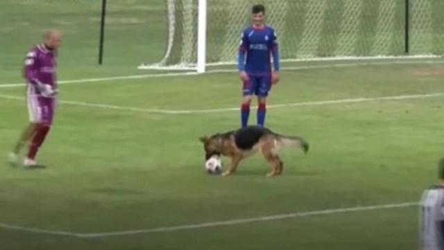 İspanya'da maç esnasında sahaya atlayan köpeğin topla oynayabilmesi için karşılaşma durduruldu