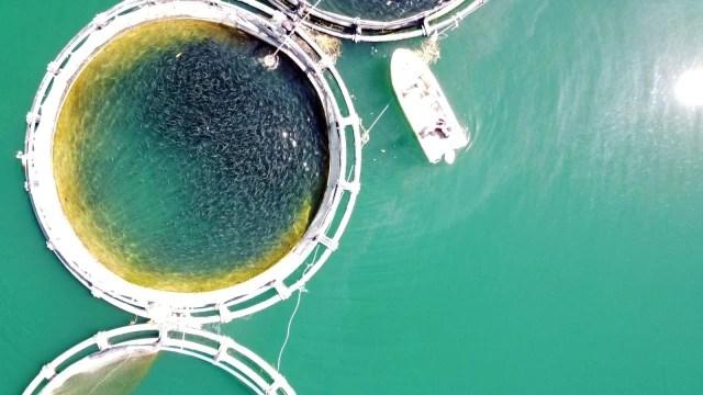 Denizi olmayan Yozgat'ta yılda 60 ton balık üretiyor