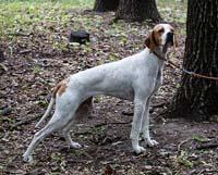 Выставка охотничьих собак. Фото - Николай Ефремов