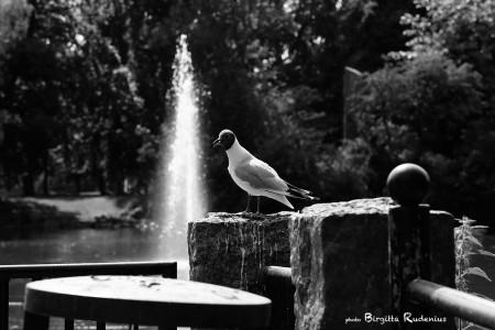 bird_20130719_skrattmas1