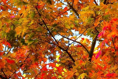 autumn_20131002_leaf