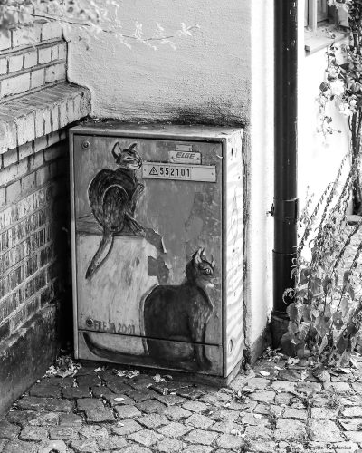 bw_20130713_cats