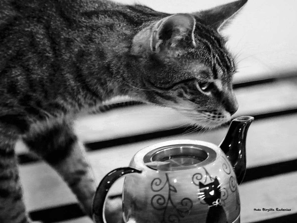 bw_20140206_catcafe