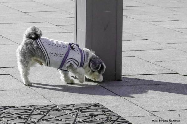 dog_20140213_dressed