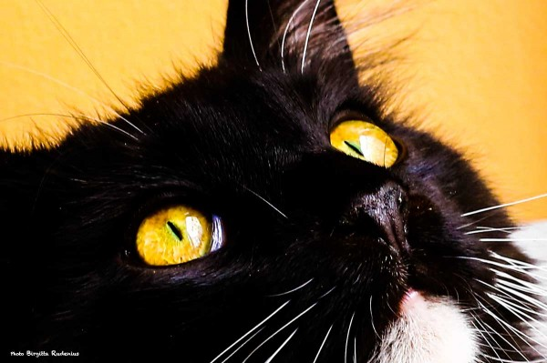 cat_20140315_eyes