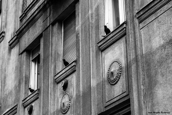 window_20140402_raven