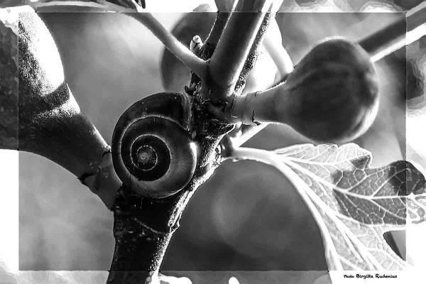 nature_20140601_snailfigs