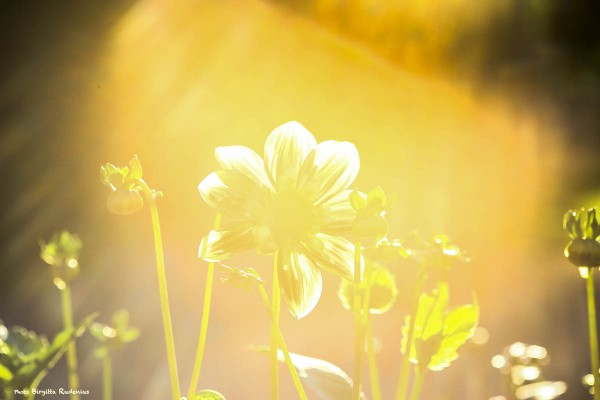 nature_20140716_backlight