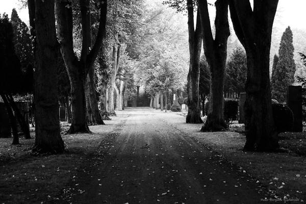 bw_20141003_graveyard