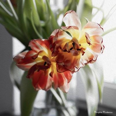 blom_20150319_tulips