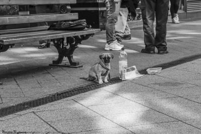 bw_20150410_puppybeggar