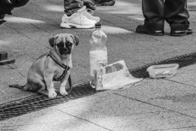bw_20150410_puppybeggar_