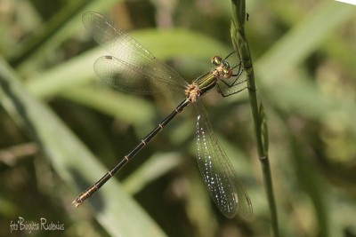 dragonfly_20150701_3