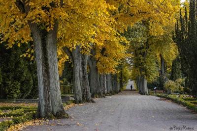 Norra kyrkogården i Lund
