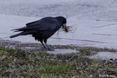 For a birds nest