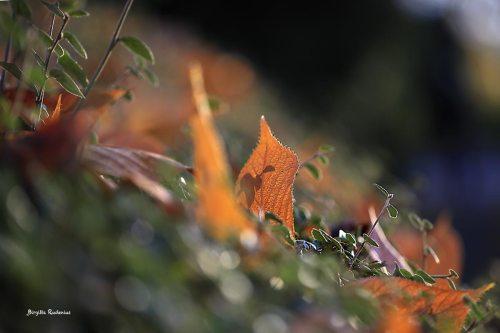 Autumn Walk in Lund