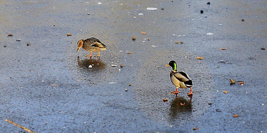 Birds in City Park Lund