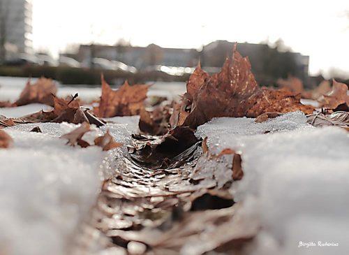 Autumn - I cykelspåret