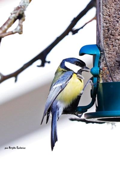Photo Birds @ Birgitta Rudenius