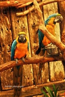 A pair of birds at Kirstenbosch Botanical Garden in Cape Town, South Africa.