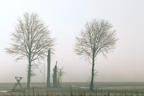 Morgennebel II